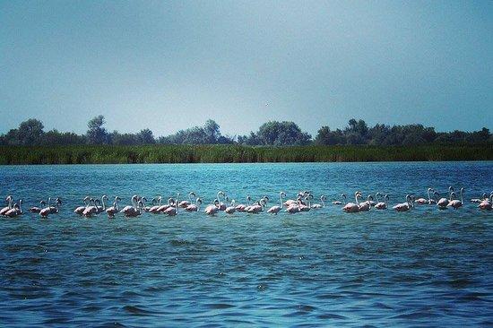 Carcana - Delta del Po - Day Tours: Fenicotteri