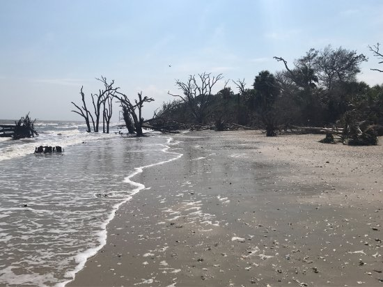 Botany Bay Plantation Heritage Preserve and Wildlife Management Area: photo2.jpg