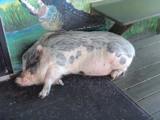 Midway, فلوريدا: Porkchop