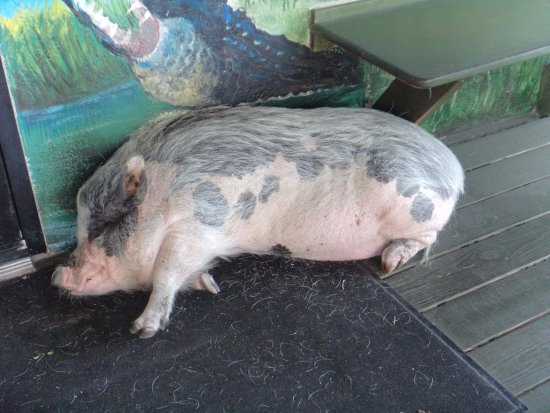 Midway, Flórida: Porkchop
