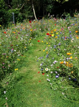 Alsager, UK : Wildflowers for attracting pollinating insects