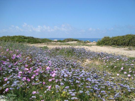 Maa-Palaeokastro Settlement: Красивая цветущая полянка на территории
