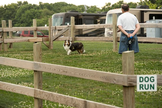 Gordonville, PA: Dog Run