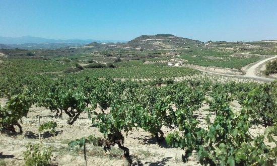 Villabuena de Alava, Испания: IMG-20170730-WA0036_large.jpg