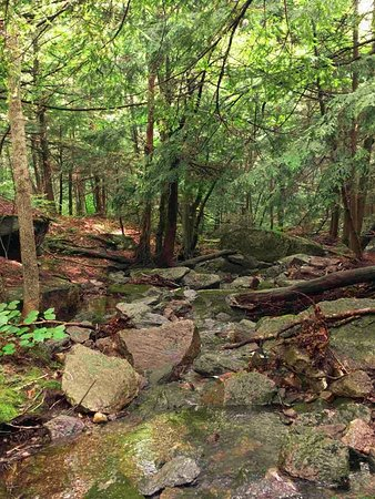 Savoy Mountain State Forest: Hike