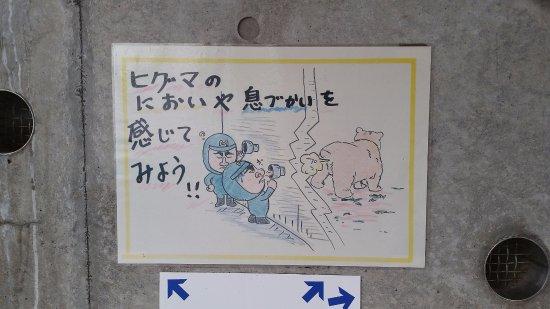 写真札幌市枚