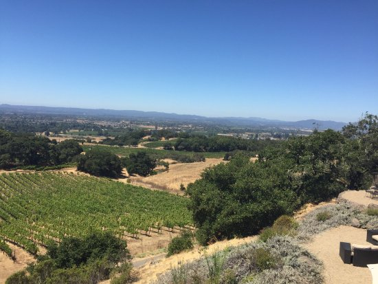Paradise Ridge Winery: photo1.jpg