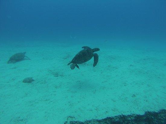Reef Pirates Diving : photo0.jpg