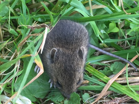Boa Island, UK: Field mice in the cemetery