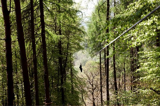 Graythwaite, UK: Grizedale Forest for Zip Wiring