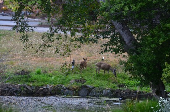 Little River, Califórnia: Wildlife in the early AM