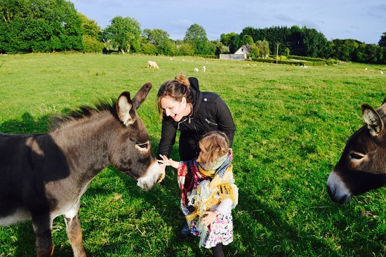 Lough Owel Lodge: Farm fun with Sonny and Cher