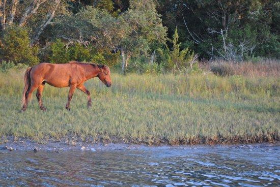 Beaufort Inn: Wild Horses