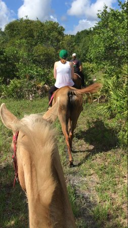 Myakka City, FL: On a ride with Teacup and General Lee!