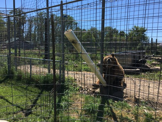 Animal Haven Zoo