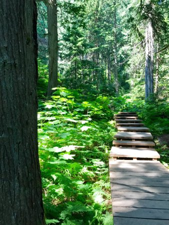 Giant Cedars Boardwalk Trail: photo0.jpg