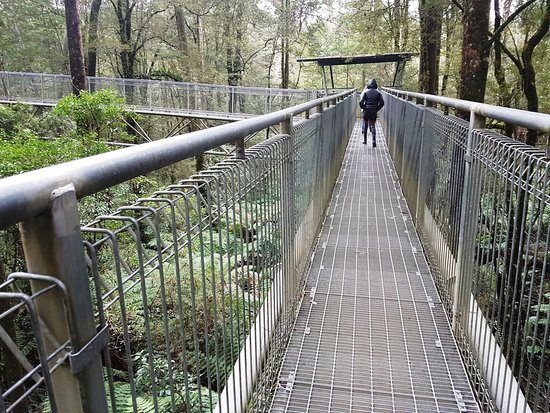 Otway Fly Treetop Adventures: The view from the first stage of the walk