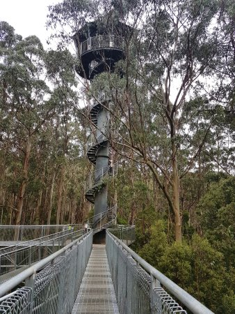 Otway Fly Treetop Adventures: The tower offers a wonderful view