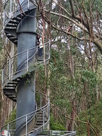"Otway Fly Treetop Adventures: The ""Tower"""