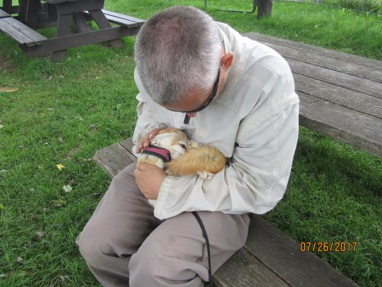 Orono, Canada: Does that looked stressed out, part 2.  This little fennec just relaxed in my arms as I gave her