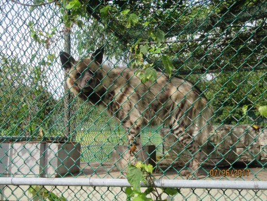 Orono, Canada: This is a striped hyena, very different from the spotted hyena of 'Lion King' fame.
