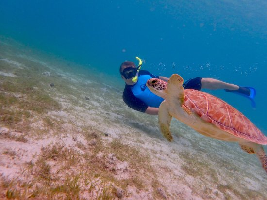 snorkeling with turtle! - Picture of St.Thomas Scuba and ...