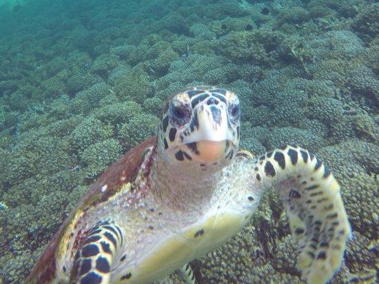Omanta Scuba Diving Academy: I made a new friend