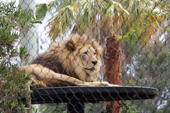 Little Lion Restaurant San Diego