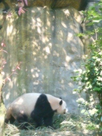 Panda Valley: Panda on the prowl