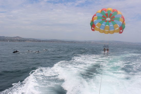 Dana Point, CA: Dolphins come to visit some of our parasailers!