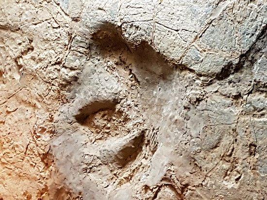 Dinosaur Stampede at Lark Quarry Conservation Park: 20170801_101718_large.jpg