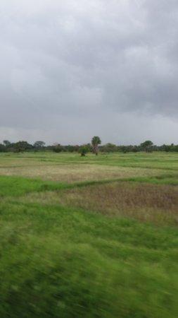 rizières- Ziguinchor