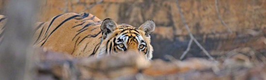 Ranthambore National Park, Indien: getlstd_property_photo