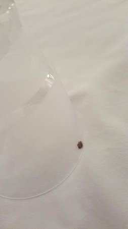 Hotel Prins Hendrik: Our room already had guests...of the bed bug variety