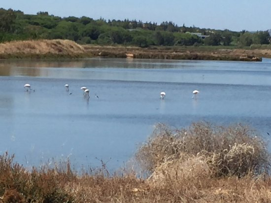 Algarve By Segway : Taking in the flamingos - before they go pink!!