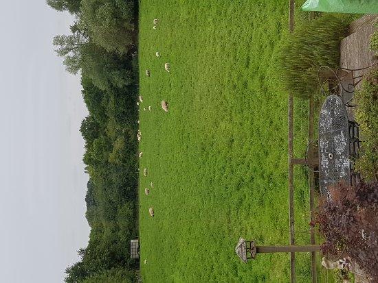 Great Moulton, UK : 20170729_181722_large.jpg