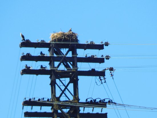 Oregon City, OR: We paddled past a huge osprey nest