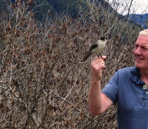 Pemberton, Canadá: Friendly bird life