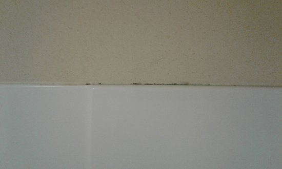 Baymont Inn & Suites Martinsville: Mold on shower wall