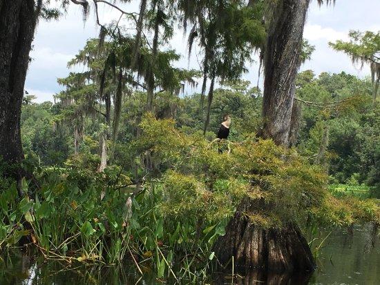 Wakulla Springs, FL: photo2.jpg