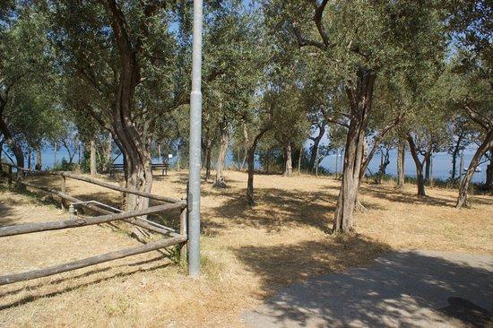 Bluegreen Village: pitches