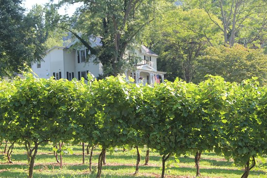 Lovingston, VA: We love our vineyard views!