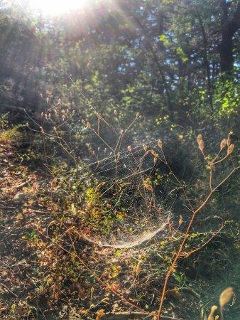 Tannourine Cedar Forest Nature Reserve: photo7.jpg