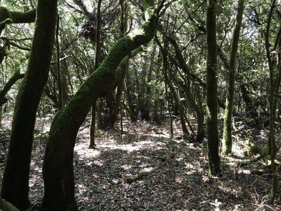 Garajonay Nationalpark: photo9.jpg