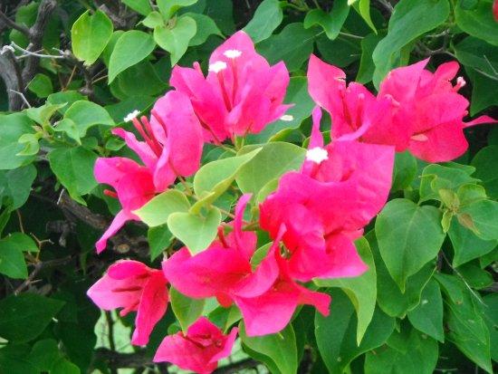 Esmeralda Resort: Pretty flowers