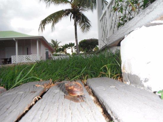 Esmeralda Resort: Loved the snails...don't step on them!