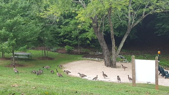 Halesford Harbour Inn: Private Beach with geese...