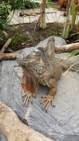 The National Reptile Zoo照片