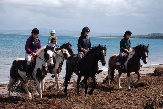 Camp, Ireland: Horses after a cool down in the ocean.