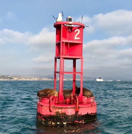 Right Outside of DANA POINT HARBOR, CA, Seals!